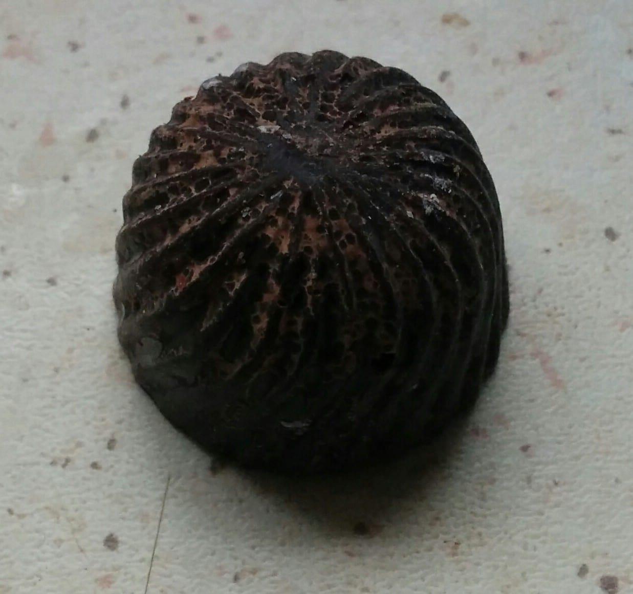 Hjemmelaget konfekt stygt utseende
